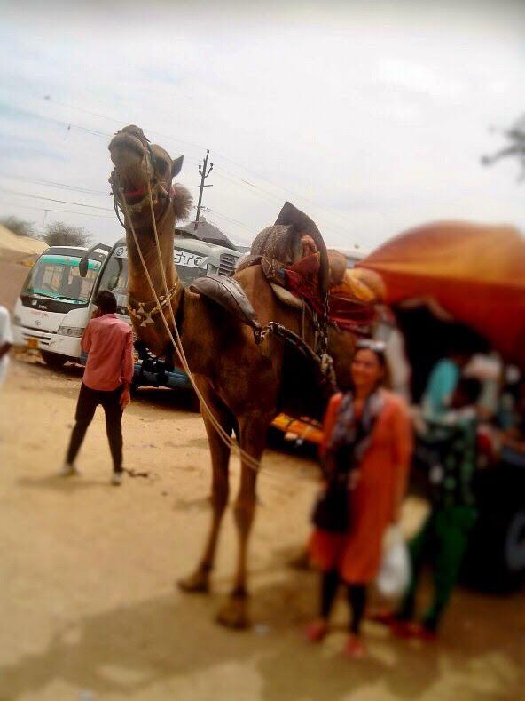 pushkar-camel-carriage