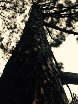 Close up a tree