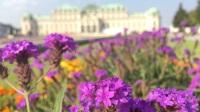 Belvedere-Palace-vienna-austria-europe-museum-flowers